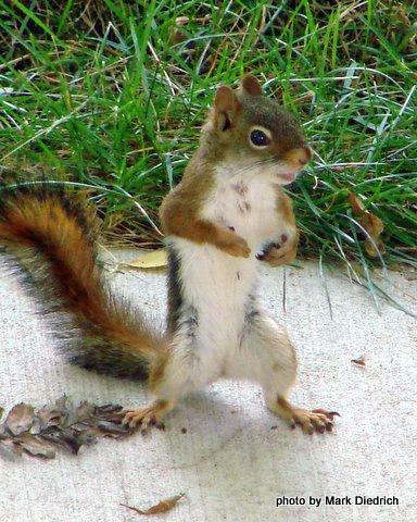 Joe Cool Squirrel